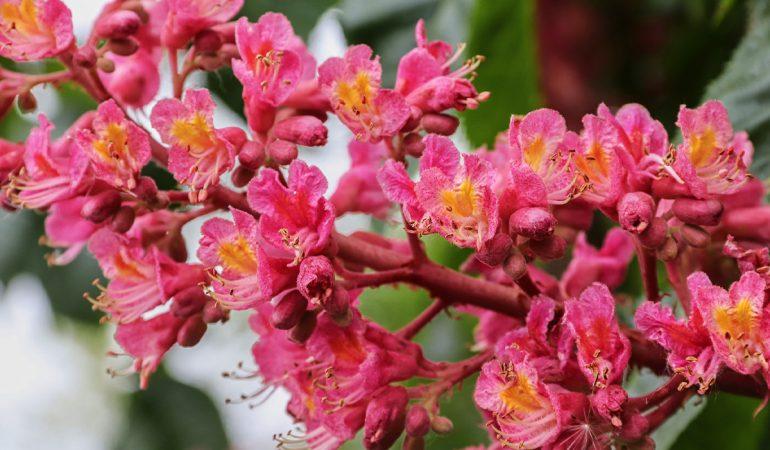 Emocije i zdravlje uz pomoć Bahovih cvijetnih esencija